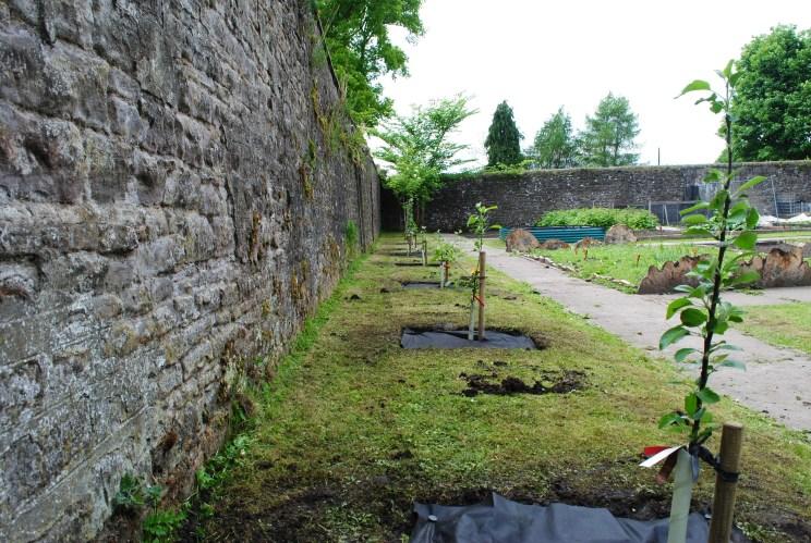 Dundee Urban Orchard Wellburn Garden