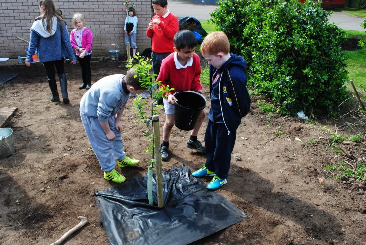 Dundee Urban Orchard Craigiebarns Primary School