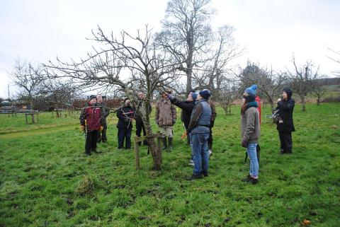 Dundee Urban Orchard - Pruning workshop with Abndrew Lear, February 2017