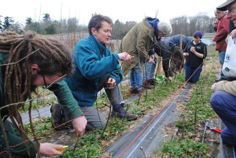 Dundee Urban Orchard - Scone Palace Grafting Workshop - March 2017