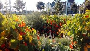 edible-garden