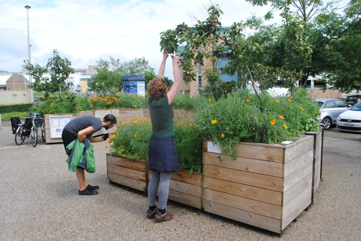 Dundee Urban Orchard - Maintenance and Care visit to the Art-Science Orchard, 2016